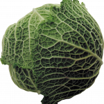 Free download of Cabbage PNG Icon