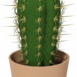 Best free Cactus PNG in High Resolution