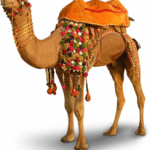 Best free Camel PNG Picture