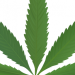 Best free Cannabis Transparent PNG Image
