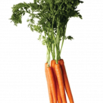 Download this high resolution Carrot Icon Clipart