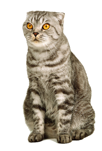 Download for free Cats Transparent PNG Image