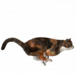 Free download of Cats Icon PNG