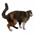 Now you can download Cats PNG Icon