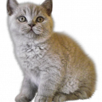 Grab and download Cats Icon