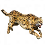 Download this high resolution Cheetah Transparent PNG File