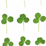 Grab and download Clover  PNG Clipart