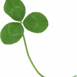 Download this high resolution Clover Icon PNG