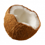 Download and use Coconut PNG Picture