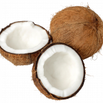 Free download of Coconut PNG Picture