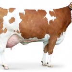 Now you can download Cow Icon