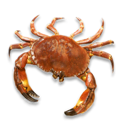 Grab and download Crab Icon