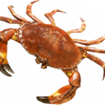 Download and use Crab PNG Image