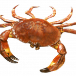 Best free Crab In PNG