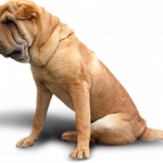 Now you can download Dogs PNG Image