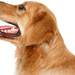 Download and use Dogs PNG Image Without Background