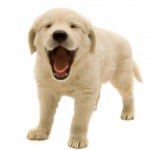 Download for free Dogs PNG Picture