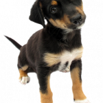 Best free Dogs PNG in High Resolution