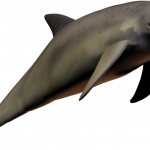 Now you can download Dolphin Transparent PNG File