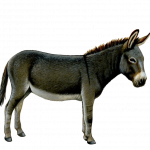 Now you can download Donkey  PNG Clipart