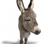 Free download of Donkey PNG Image