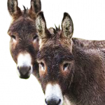 Download this high resolution Donkey PNG Image Without Background