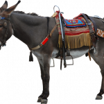 Grab and download Donkey PNG Picture