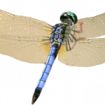 Download this high resolution Dragonfly High Quality PNG