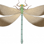 Download and use Dragonfly Transparent PNG Image