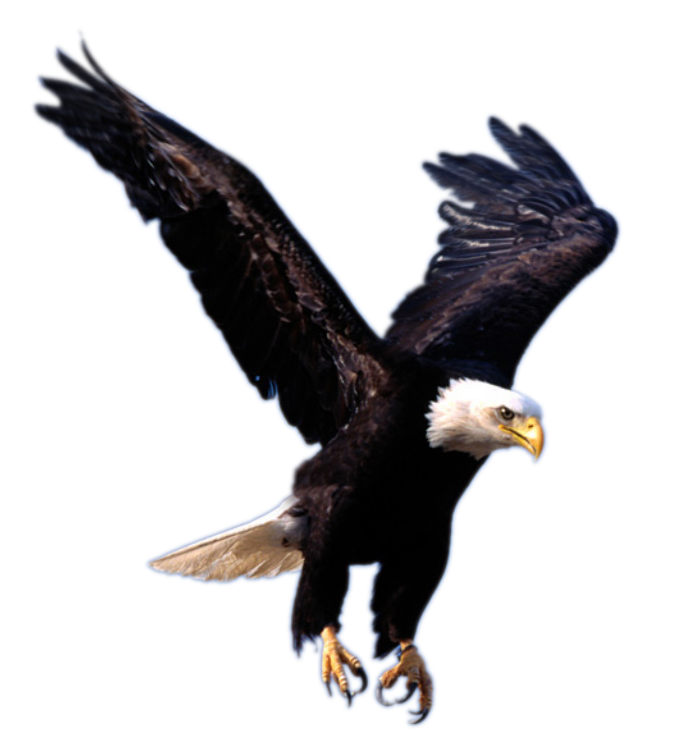 Now you can download Eagle PNG Icon