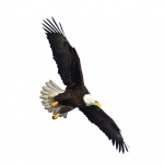 Download and use Eagle In PNG