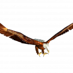 Download for free Eagle High Quality PNG