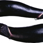 Download for free Eggplant  PNG Clipart