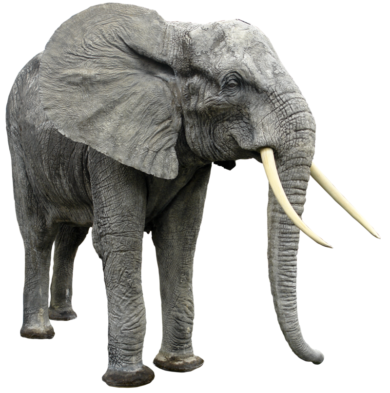 Best free Elephants High Quality PNG