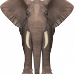 Download for free Elephants Icon PNG