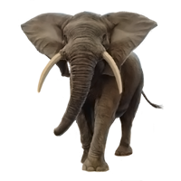 Elephants Icon Png Web Icons Png Download elephant png images transparent gallery. web icons png