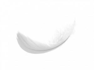 Free download of Feather PNG Icon