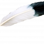 Grab and download Feather PNG Icon