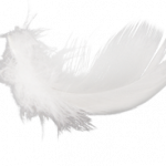 Download for free Feather Icon