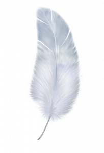 Best free Feather PNG Icon