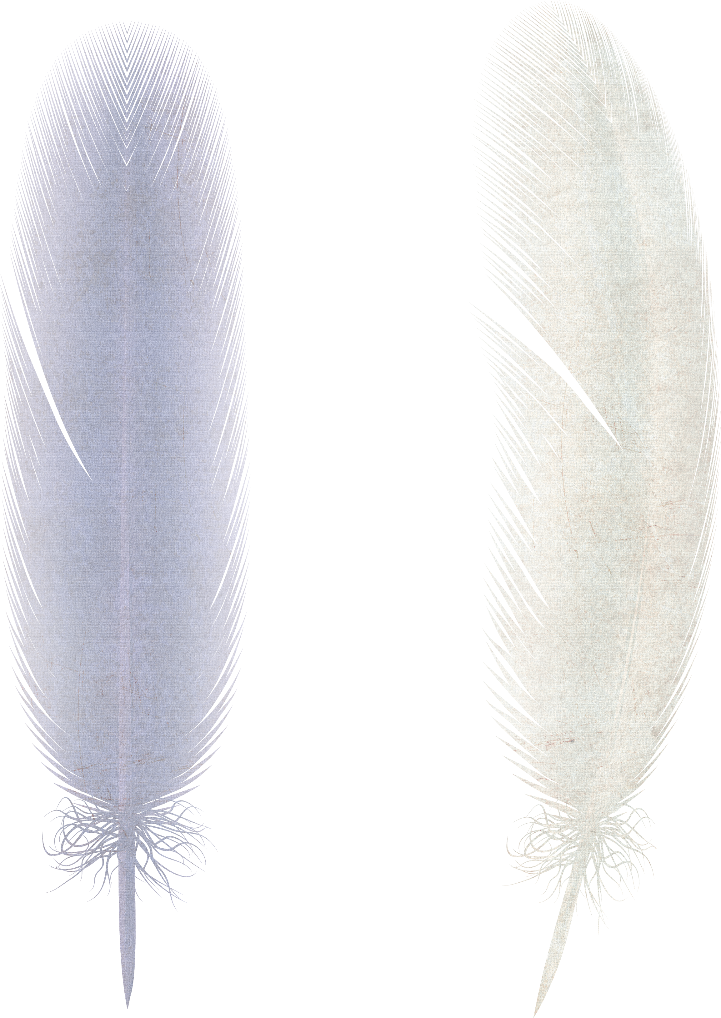 Free download of Feather PNG Image Without Background