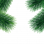 Download this high resolution Fir-Tree PNG