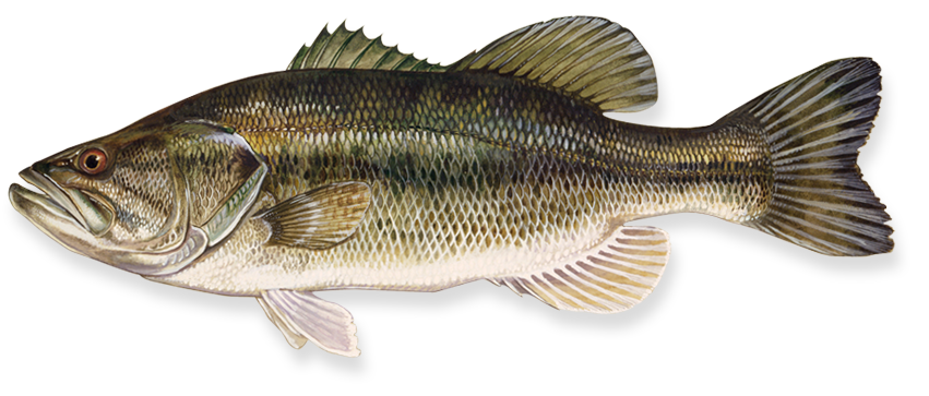 Download for free Fish PNG in High Resolution