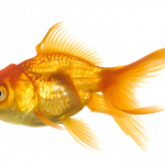 Download for free Fish Icon