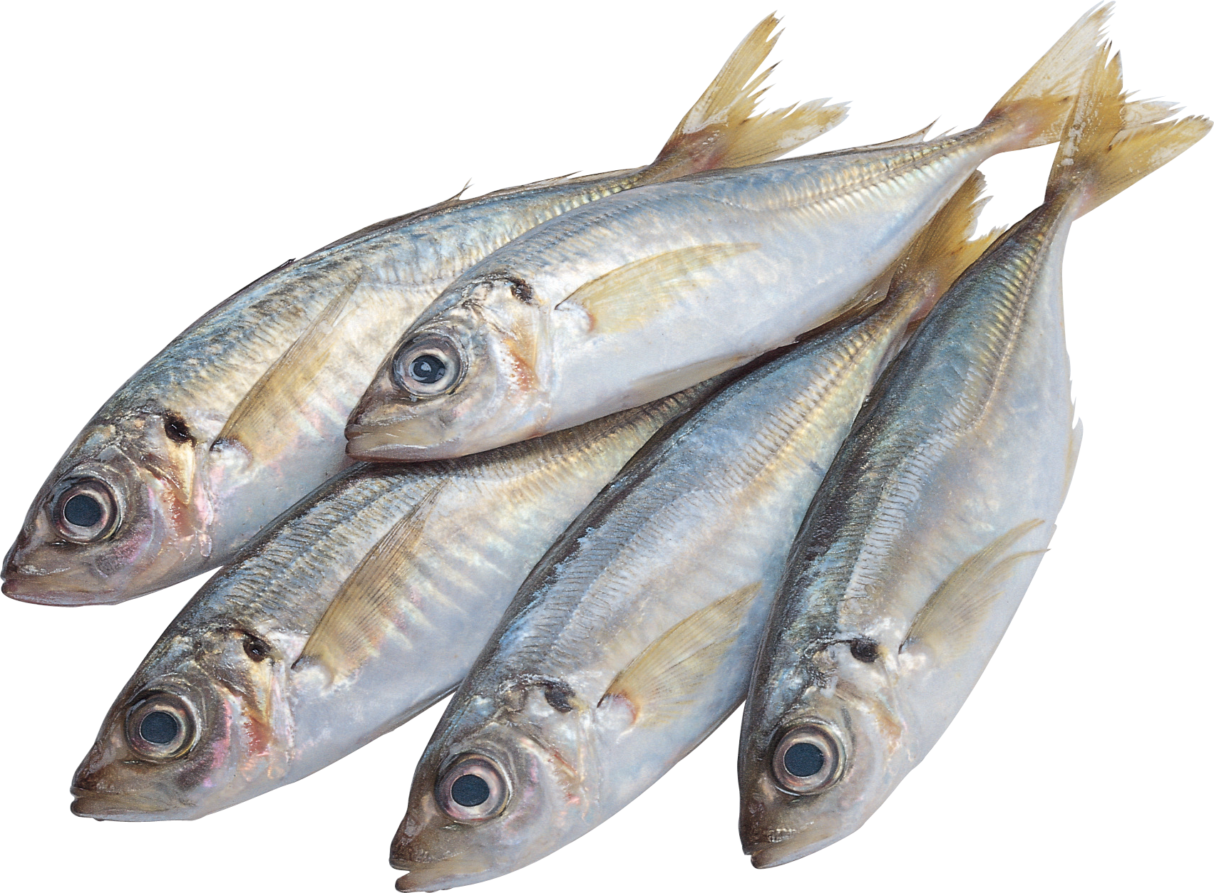 Best free Fish PNG