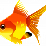 Download this high resolution Fish In PNG