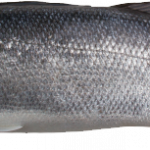 Free download of Fish In PNG