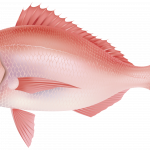 Best free Fish Icon Clipart