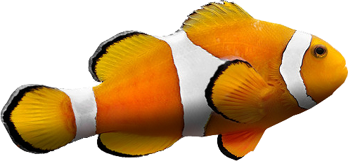 Best free Fish PNG Picture