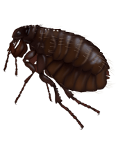 Download and use Flea PNG Image Without Background